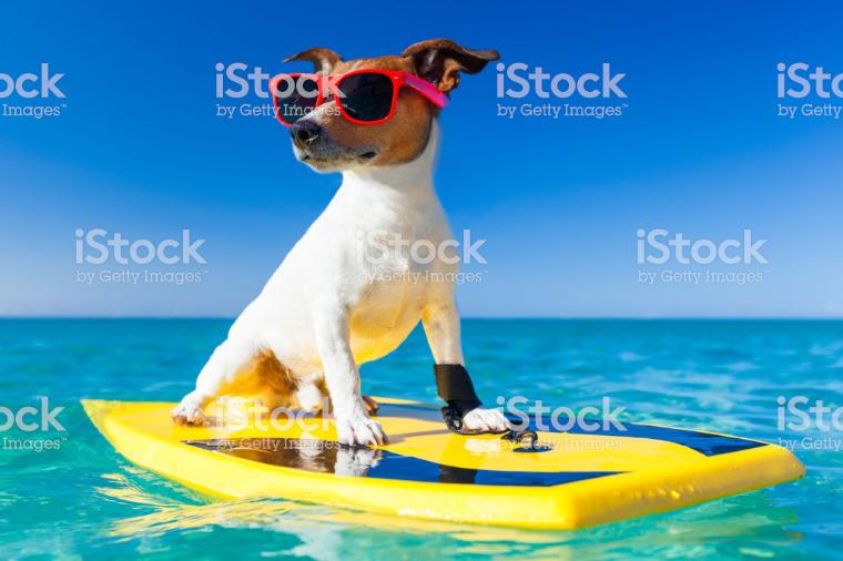 DogCation placeholder